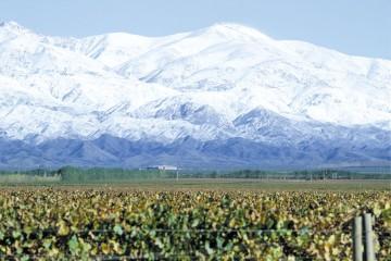 Oasis Vitivinícola del Valle de Uco: Viñedos Salentein
