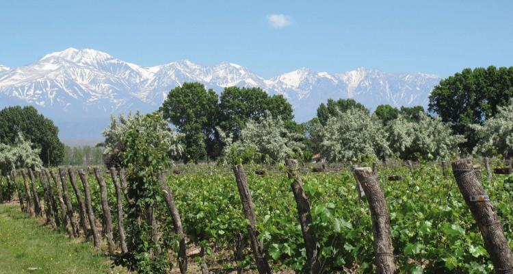 Tradición del Vino: Viñedos, olivares y Cordón del Plata