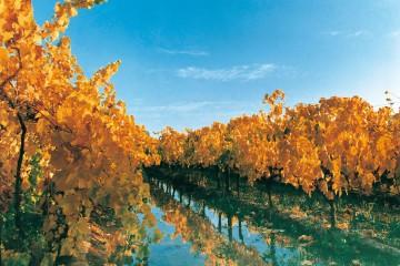 Oasis Vitivinícola de la Región Sur