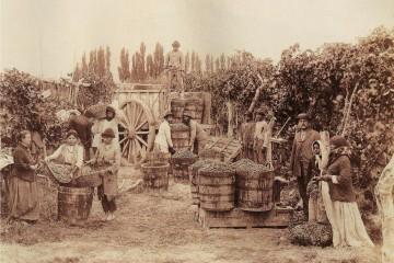 Historia de la Vitivinicultura en Mendoza