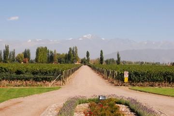 Vitivinicultura en Mendoza