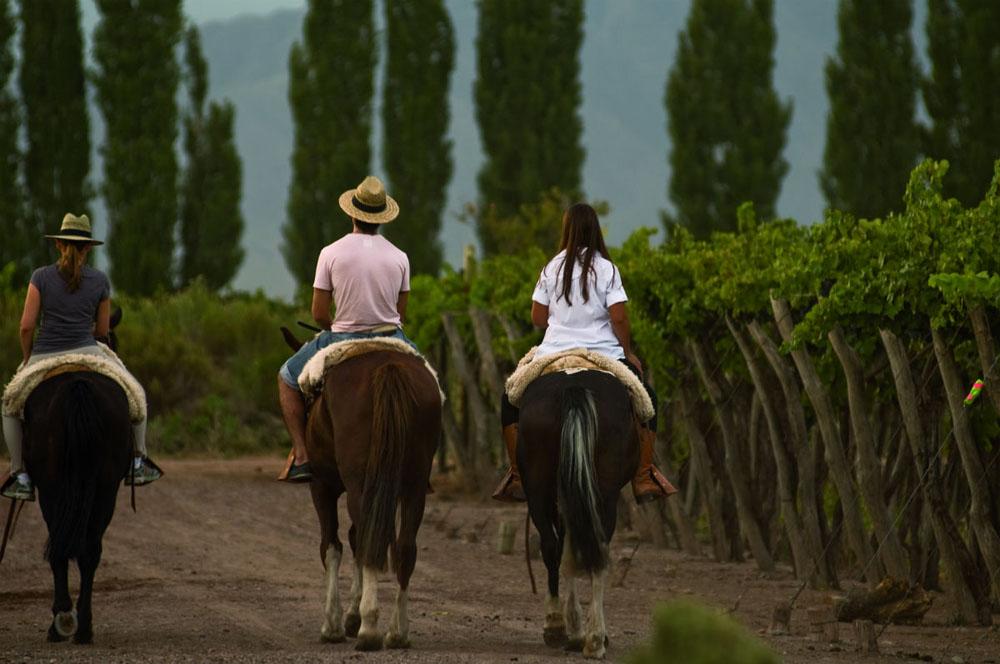 Cabalgata entre viñedos