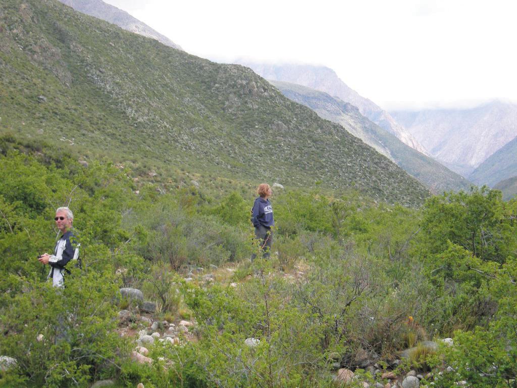 Flora Parque Provincial Tupungato