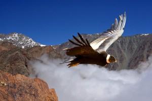 Mendoza a vuelo de condor