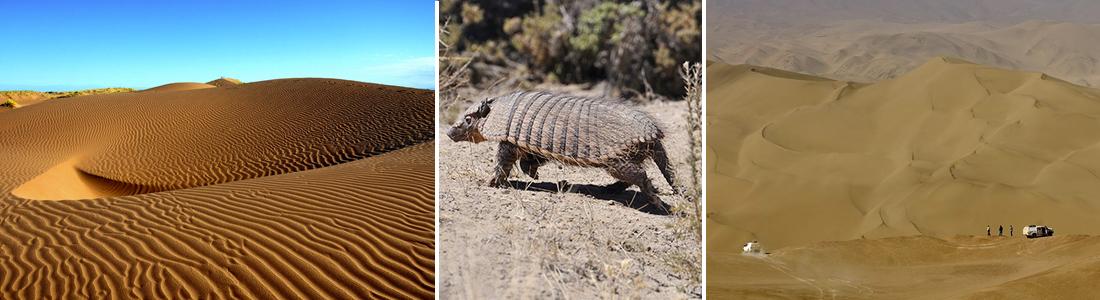 Paisajes del desierto mendocino