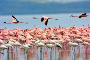 Flamencos en la Laguna de Llancanelo