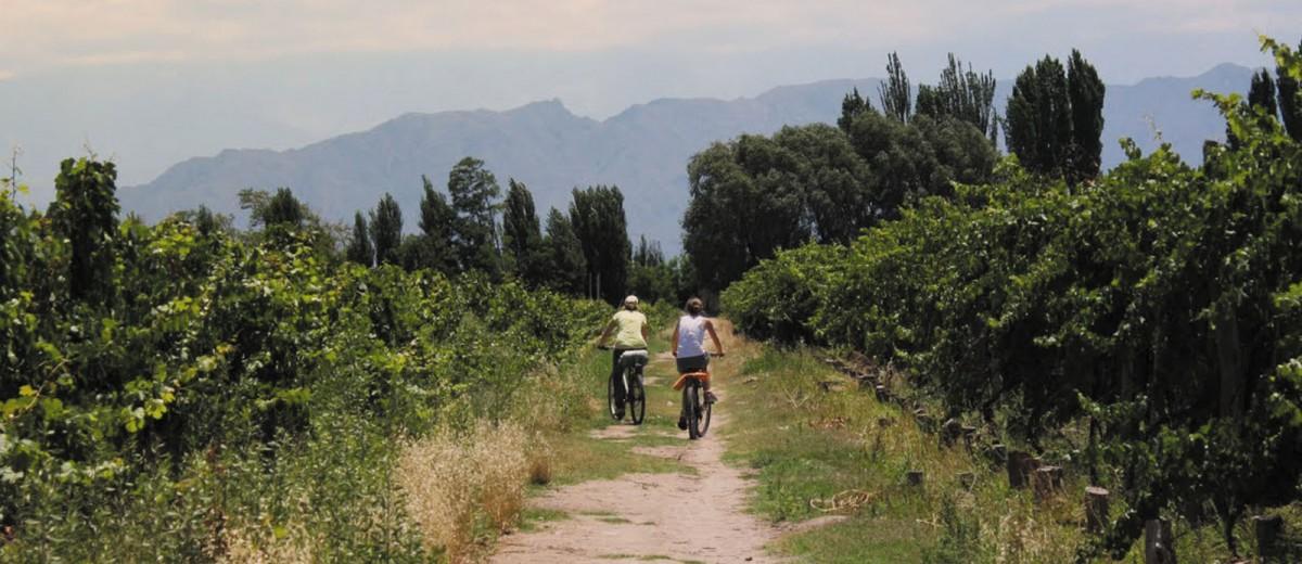 Bike en los viñedos