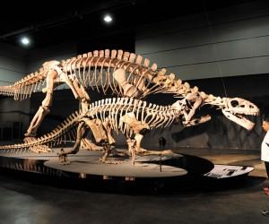 La ruta de los dinosaurios