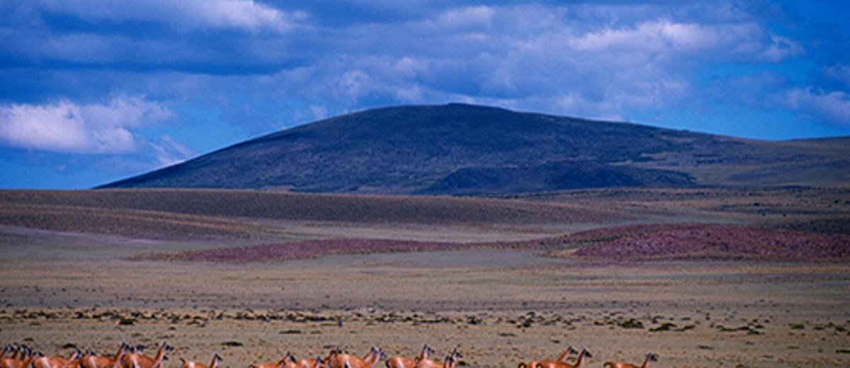 Áreas naturales - La Payunia