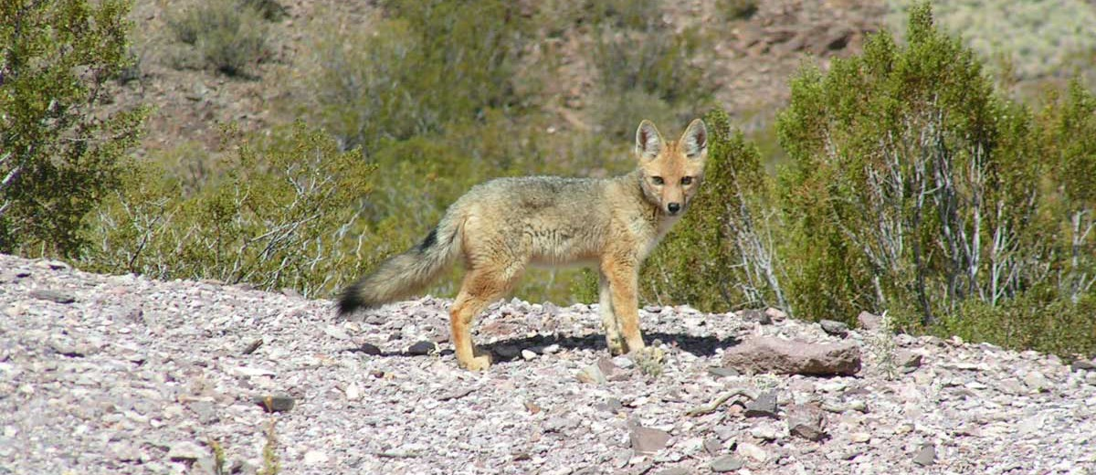 Fauna de Reserva Divisadero Largo
