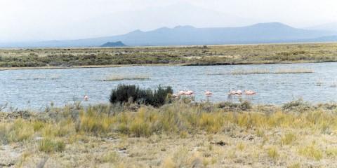 Laguna de Llancanelo
