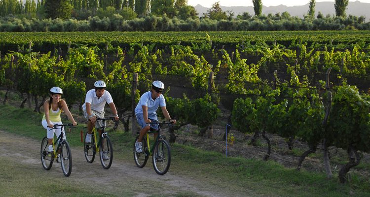 Ruta en bicicleta por los Caminos del Vino